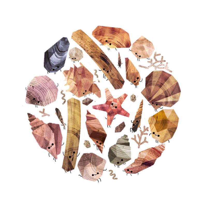 seashell collection 800 Benjamin Flouw
