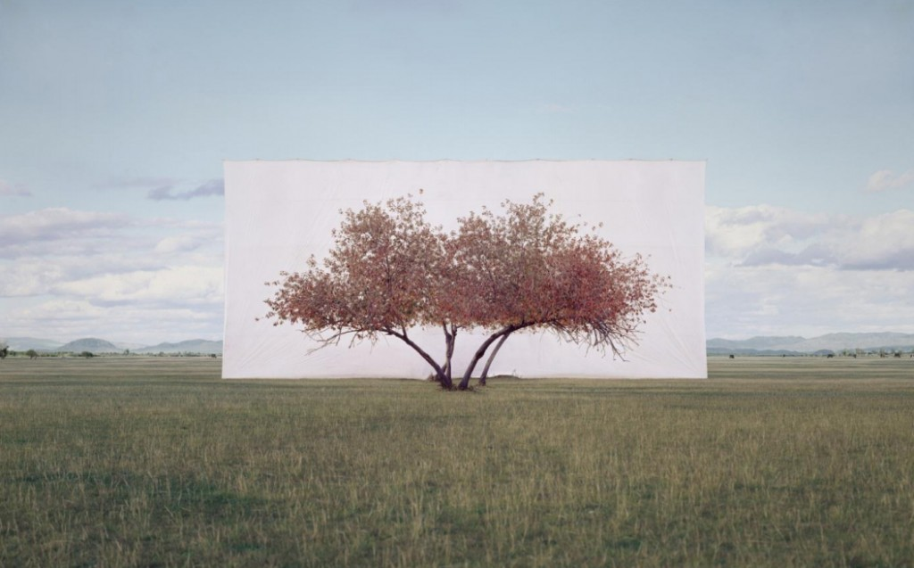 1 Myoung Ho Lee tree trees 1 1024x637 Myong Ho Lee