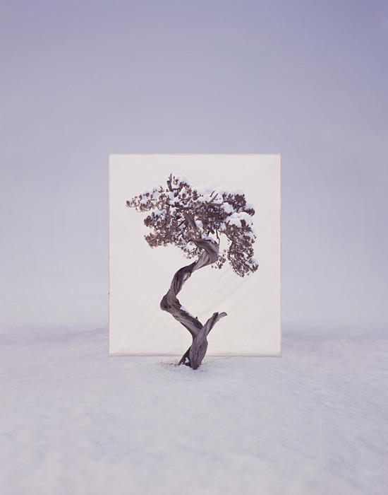 Myoung Ho Lee tree trees 1 Myong Ho Lee