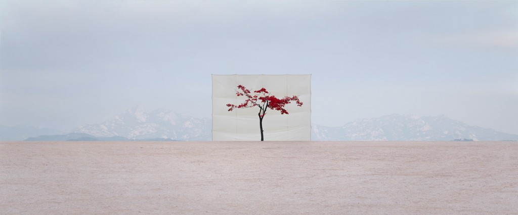 Myoung Ho Lee tree trees 3 1024x426 Myong Ho Lee